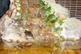 Aqua Centrum - żółwie wodne - Hotel Faltom