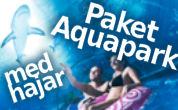Paket Aquapark med hajar